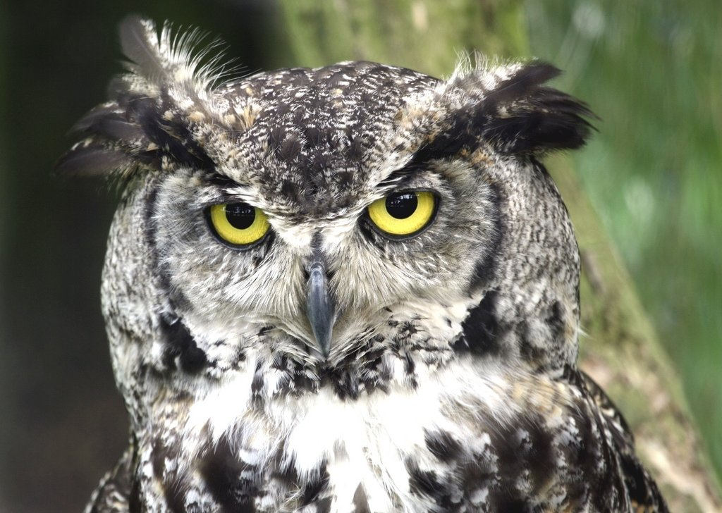 Old Owl Well - Lost Mine of Phandelver audio atmosphere