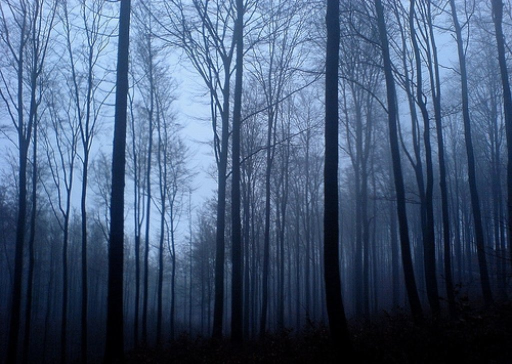 Haunted Forest Night Audio Atmosphere