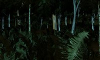 Jungles of Chult - Night #2